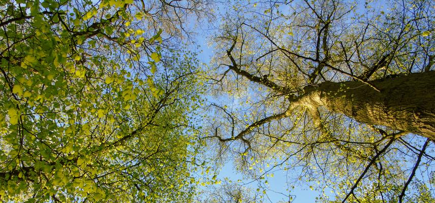 arboretum tree tops