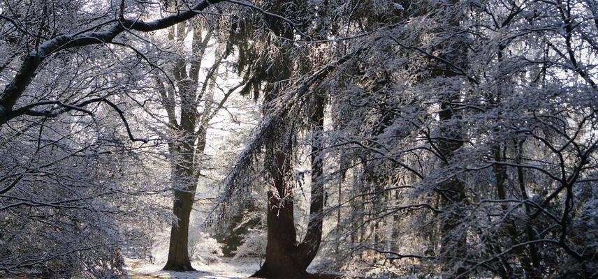 harcourt arboretum  acer glade  winter  snow