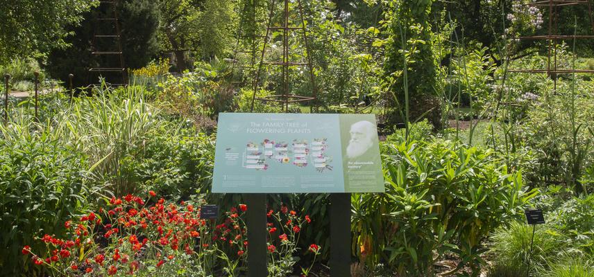 walled garden  taxonomic beds  interpretation  botanic garden