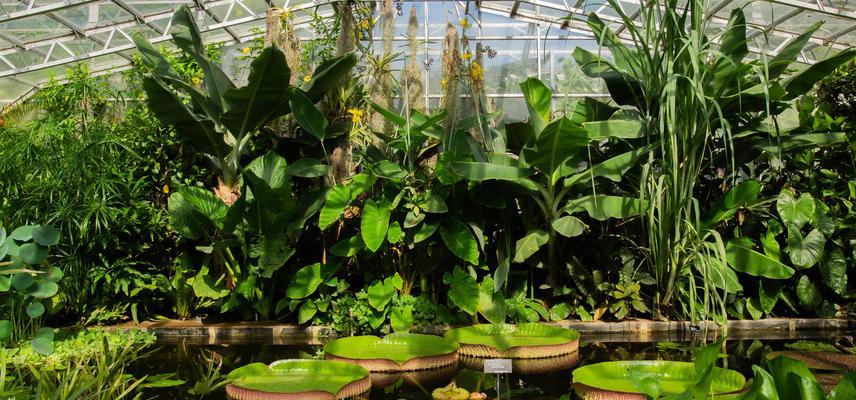 water lily house  botanic garden  summer