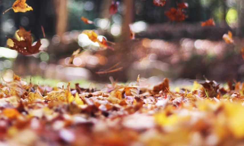 autumn-15013