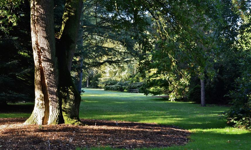 Shadows in the Arboretum