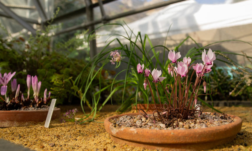 Plants From High Places - Botanic Garden - Glasshouses