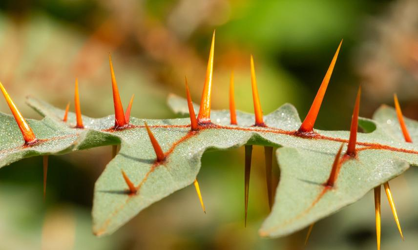 Oxford Botanic Garden - Taxonomic Beds
