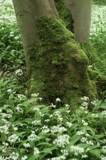 friends visits wytham woods